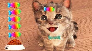Play Fun Pet Care Kids Game - Little Kitten My Favorite Cat - Fun Cute Kitten Game For Children