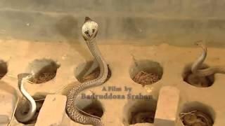 সাপের খামার Snake Farm