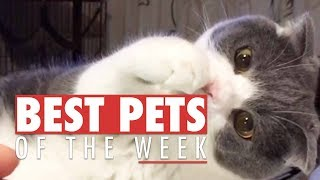 Best Pets of the Week Compilation   September 2017