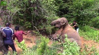 Kind Humans helping an Elephant to get up. Humans are Awesome