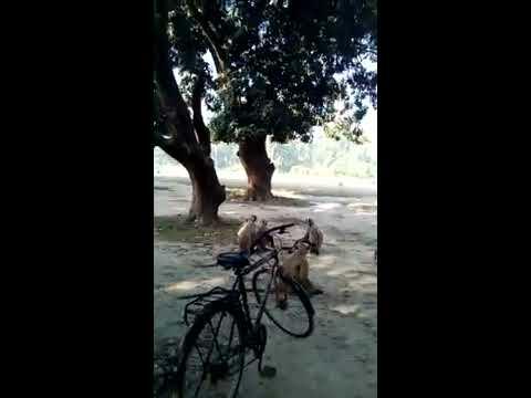 Xxx Mp4 DIRAKTAR Surojit And Kymara Man Sachin Dakhun Hunuman Dar Xxx Sax 3gp Sex