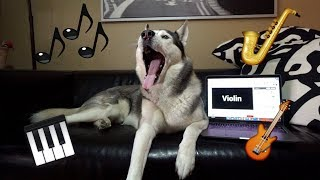 TRY NOT TO HOWL CHALLENGE - Husky Howls To Instruments?!