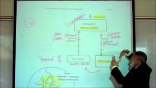 HOMEOSTATIC REFLEXES by Professor Fink