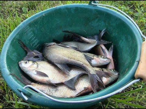 рыбалка на свислочи в черте города