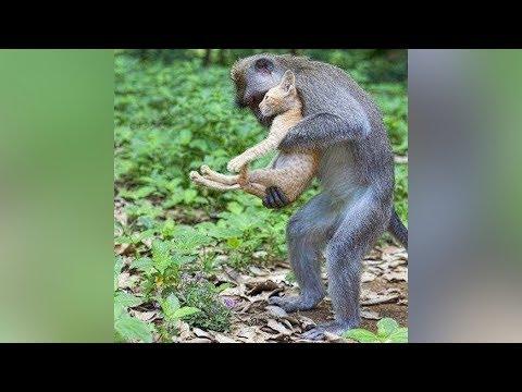 Xxx Mp4 ANIMALS SAVING EACH OTHER 3gp Sex