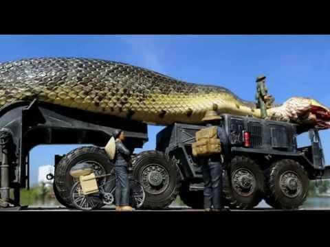 Imagens fantásticas da maior cobra do mundo