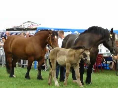 Janowo 2012 Wystawa koni zimnokrwistych cz.1