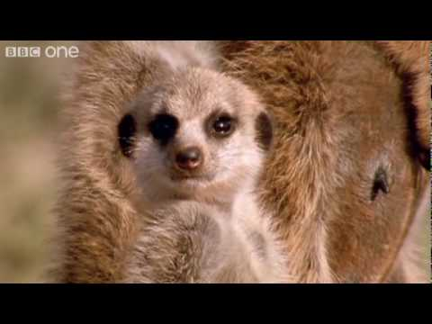 Funny Talking Animals Walk On The Wild Side Episode Two Preview BBC One