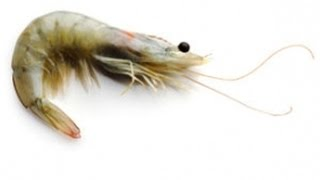 How to Clean Shrimp - The Frugal Chef