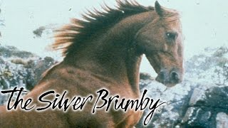 The Silver Brumby Movie Part 1
