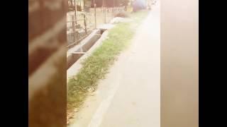 সলমান পাগলা