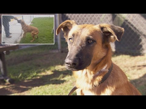Xxx Mp4 Dog Thrilled To See Owners At Shelter But They Re There To Adopt Different Dog 3gp Sex