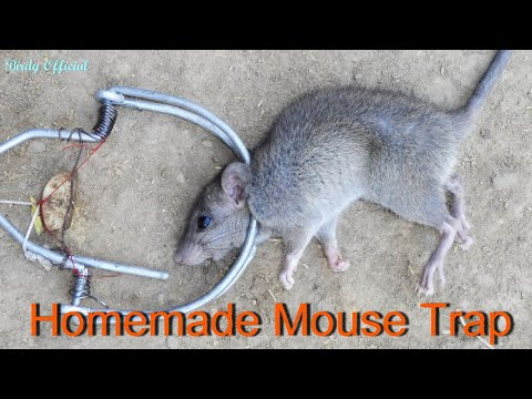 Xxx Mp4 How To Make A Mouse Trap Best Homemade Mouse Trap 3gp Sex