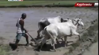 सीमा क्षेत्रमा भारतको 'ठूलदाई' प्रवृति नरोकिदा नेपाली किसानहरुको रुवावासी - MAIN NEWS