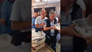 12 Mayıs 2018 Mordoğan Balık Mezatı