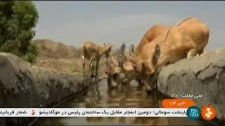 Iran Dena natural protected area report, Dena county گزارشي از منطقه حفاظت شده طبيعي دنا ايران