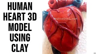 Human Heart 3D Model Using Clay by Meghna Unni