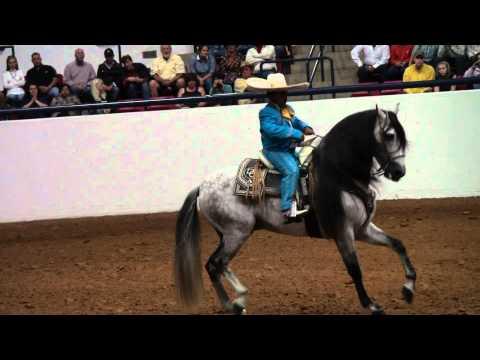 ialha national exhibitions 2010 10 Charro Flamenco D