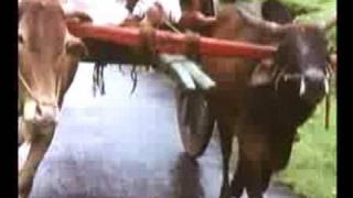 MAMTA KI CHHAON MEIN[1990]