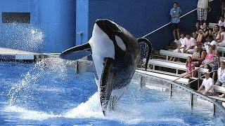برنامه تربیت «نهنگهای قاتل» برای نمایش متوقف می شود