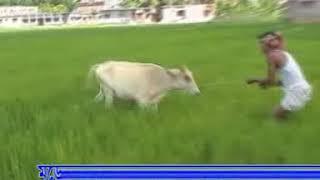 images Konte Goru Ailore