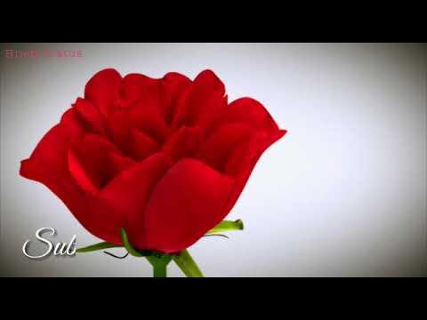 Xxx Mp4 Kisi Roj Barish Jo Aaye Song Whatsapp Status Video 3GP Mp4 Full HD 3gp Sex