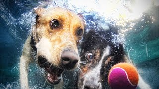 Funny and Crazy Dogs Playing 🐶 (Part 1) [Funny Pets]