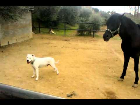 Xxx Mp4 Horse And Dogo Argentino 3gp 3gp Sex