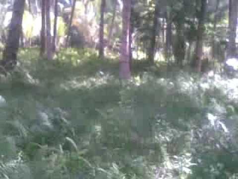 sex di hutan