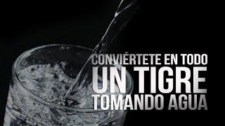 Cómo ser un tigre en la cama tomando agua   La Alcoba de Elsy Reyes