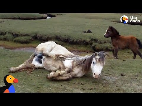 Xxx Mp4 Baby Horse Refuses To Leave Injured Mom39s Side The Dodo 3gp Sex