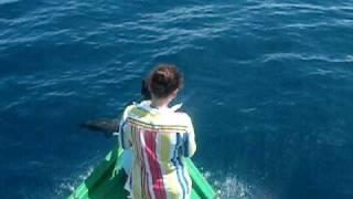 Hindi okeanynda wagşy delfinler : Wild dolphins in indean ocean