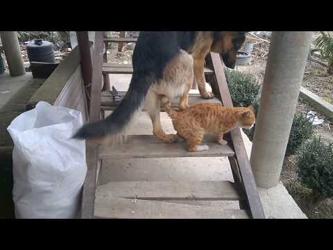 Xxx Mp4 Dog Vs Cat Dog And Cat Sex Собака и кошка секс 3gp Sex