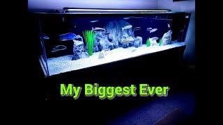 Reveal Of My DREAM AQUARIUM!!  This Is The Largest Aquarium I've Ever Owned