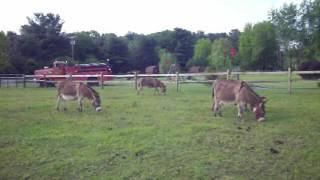 Farmer's Inn donkeys