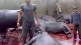 Sudesh Kumar Foundation Appeal to impose Ban on all Slaughterhouses in Meerut, India