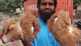Biggest Pigeon Market In Bangladesh | Travel Bangla 24 | kabootar Price