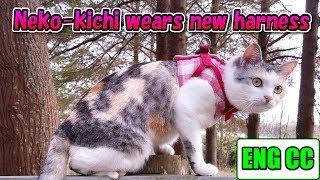 お散歩猫ネコ吉、新しいハーネスで超ハイテンションに! A walking cat's new harness