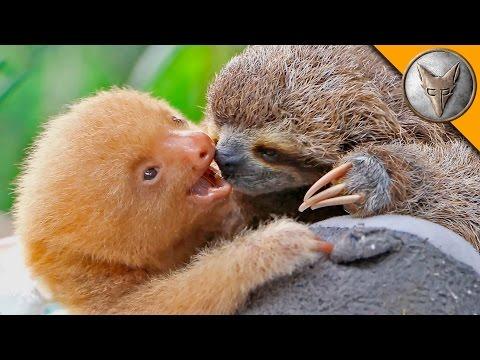 Sloth vs Sloth