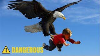 Eagle Attack Eagle vs Snake, Goat, Man, Wolf النسر يقاتل الافعى والذئب والمعزة والانسان