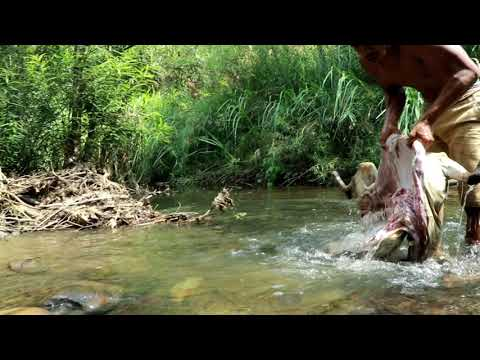 adventure in forest Bezoar Ibex Hunting end cooking Eating delicious