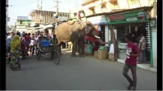 হাতি দিয়ে অভিনব পদ্ধতিতে চাঁদাবাজি !!! তাও আবার বাংলাদেশে !! Latest Bangla News   YouTube
