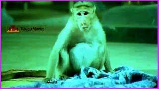 Baby Shalini & Monkey Comedy Adventures - In Chinnari Devatha Telugu Movie