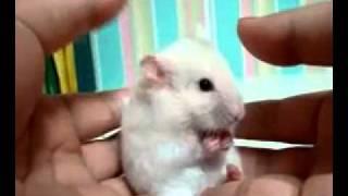 Самое короткое видео Youtub'a ( The shortest video on Youtube )