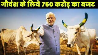 गौवंश के संवर्धन पर ध्यान देगी मोदी सरकार, गौवंश के लिये खर्च करेगी 750 करोड़ रुपये