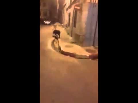 وهران خنزير يتجول في حي سيدي الهواري oran halouf fi Sidi El Houari