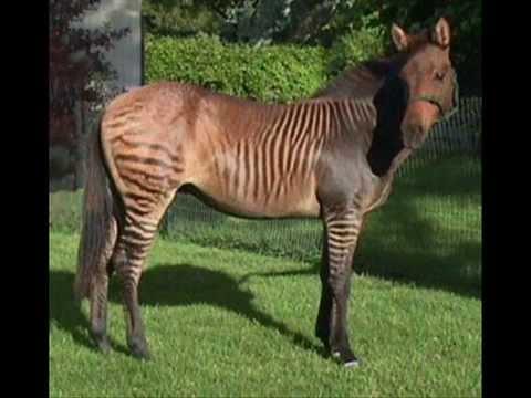 Real Animal Hybrids/Crossbreeding!