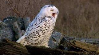 Das Naturwunder Schnee Doku ✪ Neu Dokumentarfilm HD