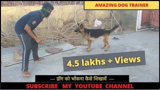 dog training in hindi