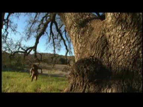 Discovery Channel e a Evolução Humana